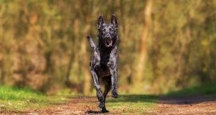 رؤية الكلاب تجري ورائي في المنام , تفسير حلم الهروب من كلب يلاحق شخص