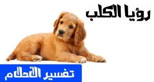 تفسير الكلبه في الحلم لابن سيرين , رؤيه الكلاب في المنام
