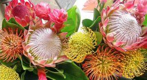 صورة اروع الصور ورد , اجمل انواع الورود