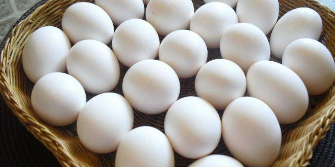 صور رؤية البيض في المنام للحامل , تفسير حلم رؤيه البيض لابن سيرين