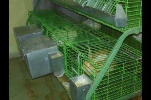 صور بطارية ارانب منزلية , كيفيه صناعه بطاريات للارانب