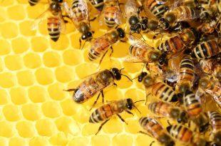 صور بحث حول مجتمع النحل , تعرف علي مفهوم مجتمع النحل
