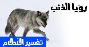 تفسير حلم الذئاب , تفسيرات كبار العلماء لرؤية الذئب في المنام