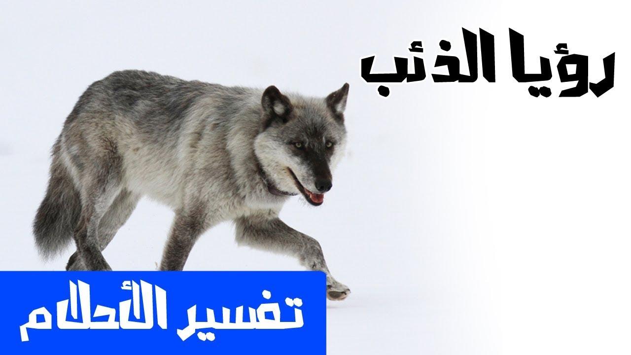 صورة تفسير حلم الذئاب , تفسيرات كبار العلماء لرؤية الذئب في المنام