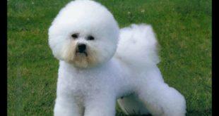 صور اجمل كلاب في العالم , لقطات روعه لكلاب مختلفه