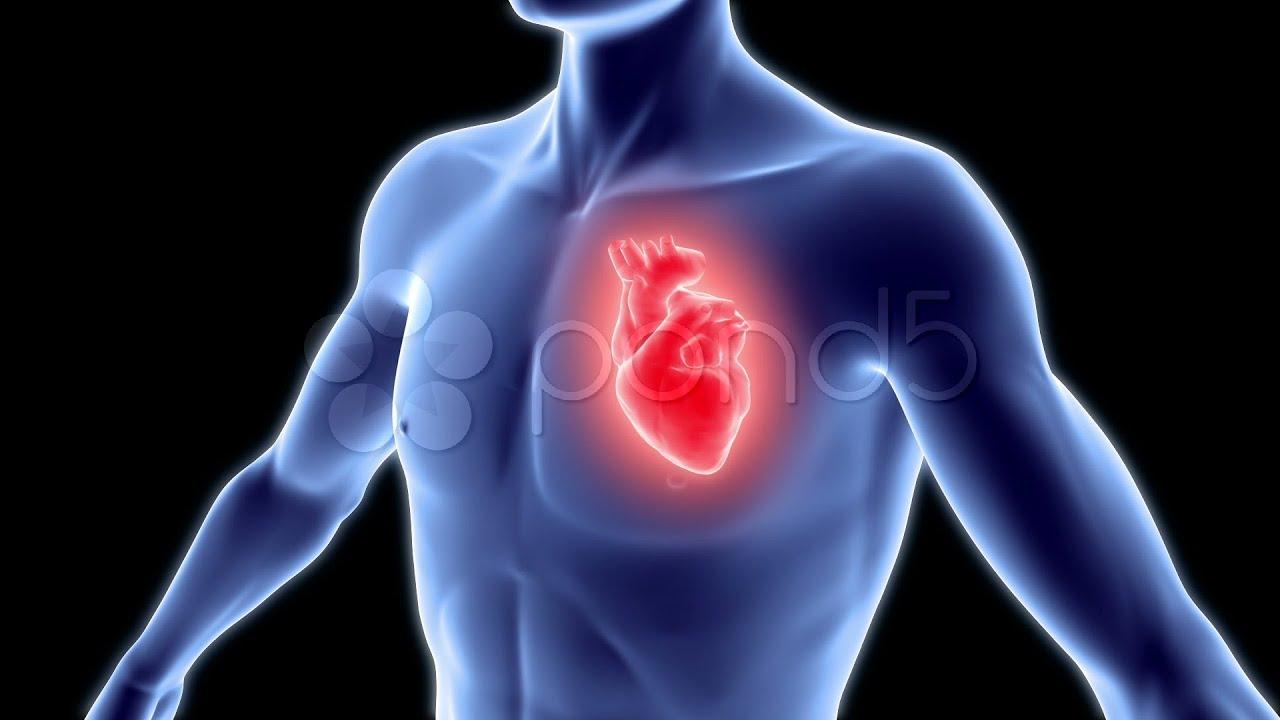 صورة القلب في جسم الانسان , معلومات عن اهم عضو في جسم الانسان