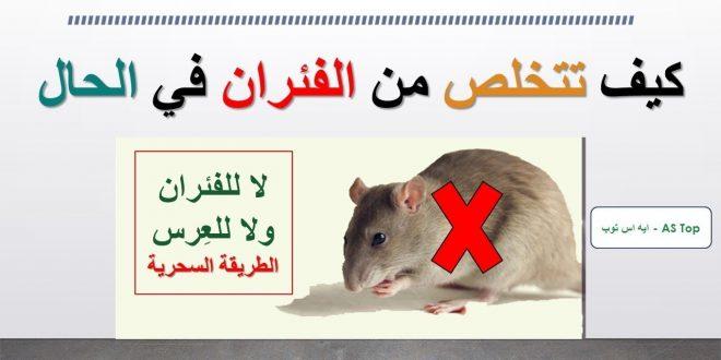صور طريقة التخلص من الفار في المنزل , صيد الفئران عند دخولها البيت