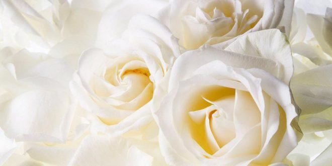 صور كلام عن الورد الابيض , لغه الورود هى لغه العشاق