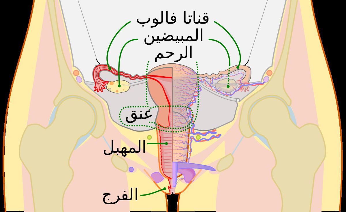 صورة اسباب النزيف الرحمي المستمر , علاج النزيف الرحمى