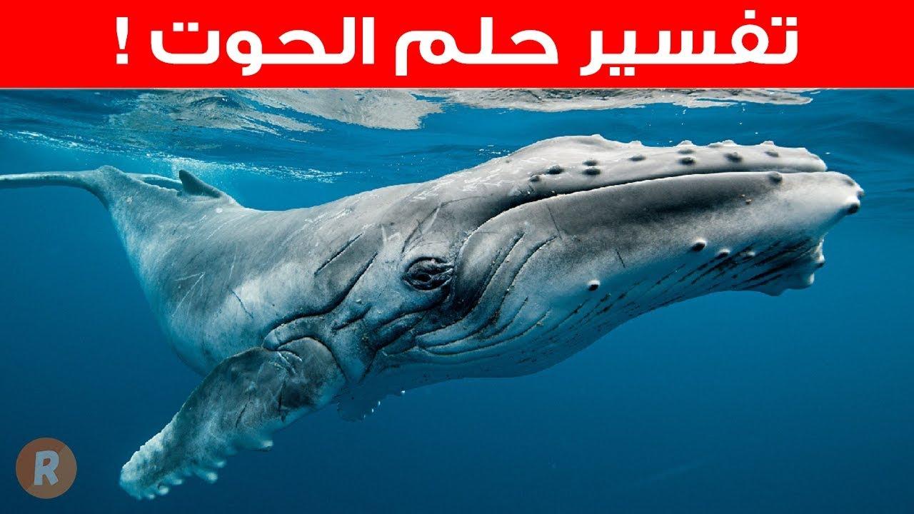 صورة رؤية الحوت في المنام , حلمت بحوت على هيئه انسان