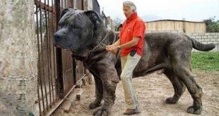 صورة افضل كلاب في العالم , احسن انواع الكلاب