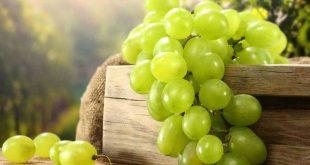 صورة معلومات عن العنب , فوائد العنب المزهله