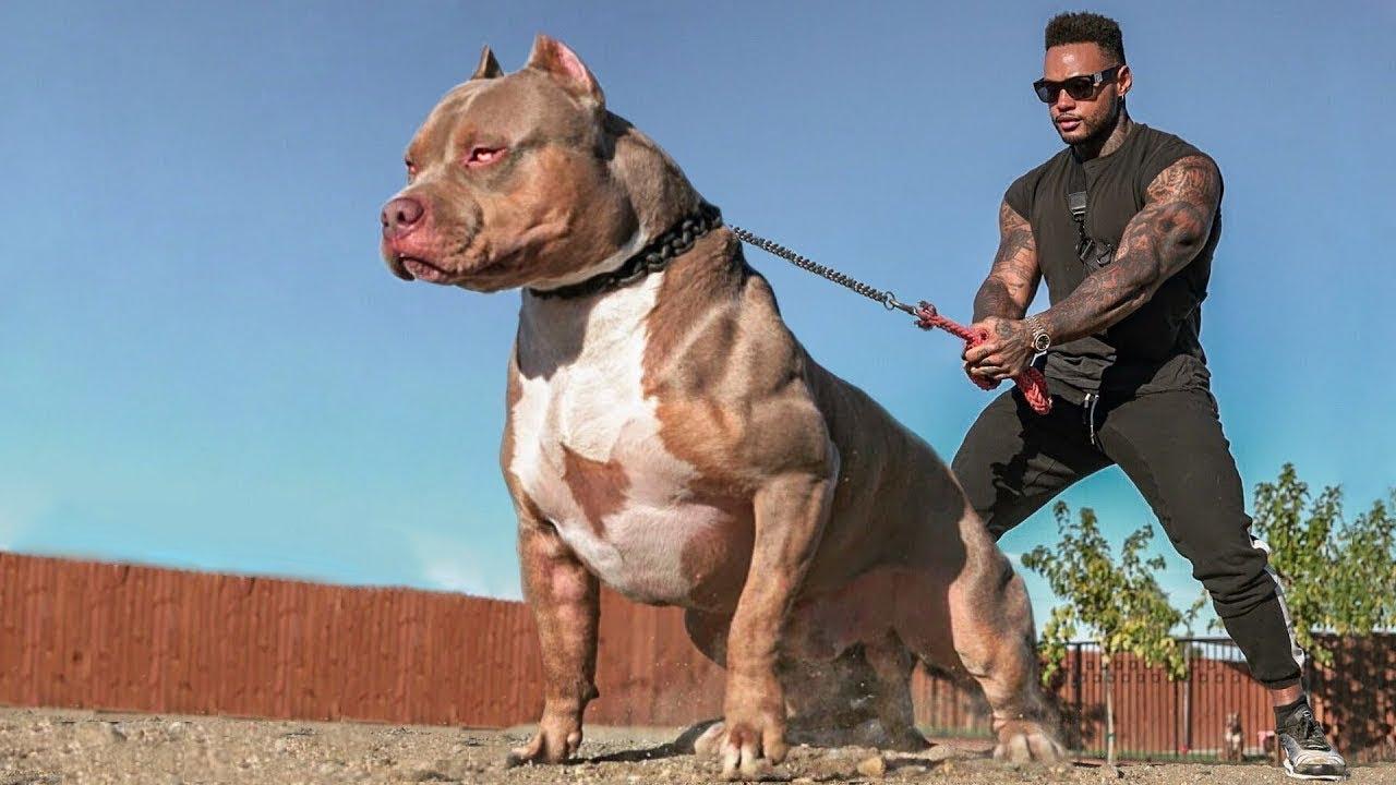صورة اقوى كلاب في العالم , مجموعه صور الاقوى والاخطر كلاب