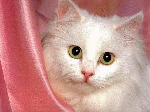 صورة رؤية قطط كثيرة فى المنام , لو شوفتى قطط بالمنام هيجيلك الخير
