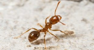 صورة تفسير حلم قرص النمل , ما يحدث لك اذا شاهدت النمل بمنامك