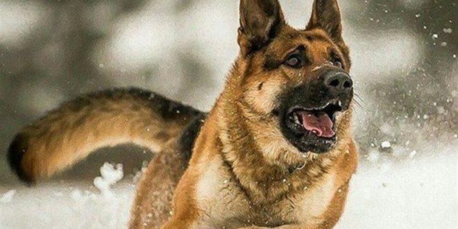 صورة ماهو تفسير حلم الكلاب , احذر من الكلب فى المنام له دلائل غريبه
