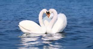 صورة اجمل الحيوانات على وجه الارض , شوف ابداع الخالق فى اجمل حيوانات على الارض