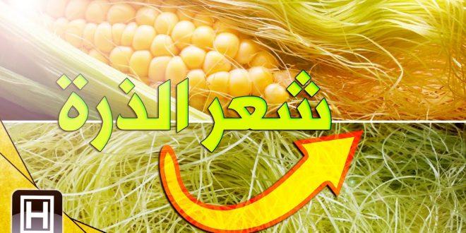 صورة فوائد شعر الذرة لانقاص الوزن , سر من اسرار شواشي الذرة