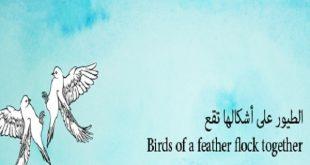 صورة ما معنى الطيور على اشكالها تقع , اشهر الامثله الطيور على اشكالها تقع ومعناه