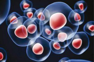 صورة علاج السكر بالخلايا الجذعية في السعودية , أثر معالجة السكر بالخلايا الجزعيه فى السعوديه 3959 3 310x205